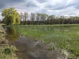 Photo of the Selestat wetlands (Credits H. Yésou, Sertit/Icube)